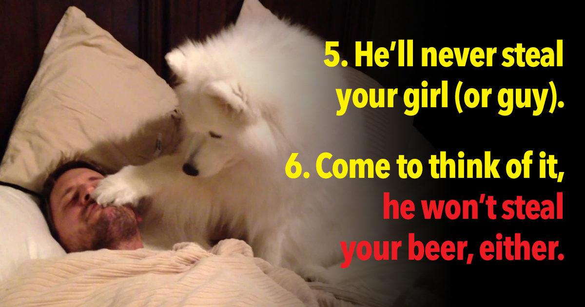 11 Reasons Dogs Make The BEST Wingmen