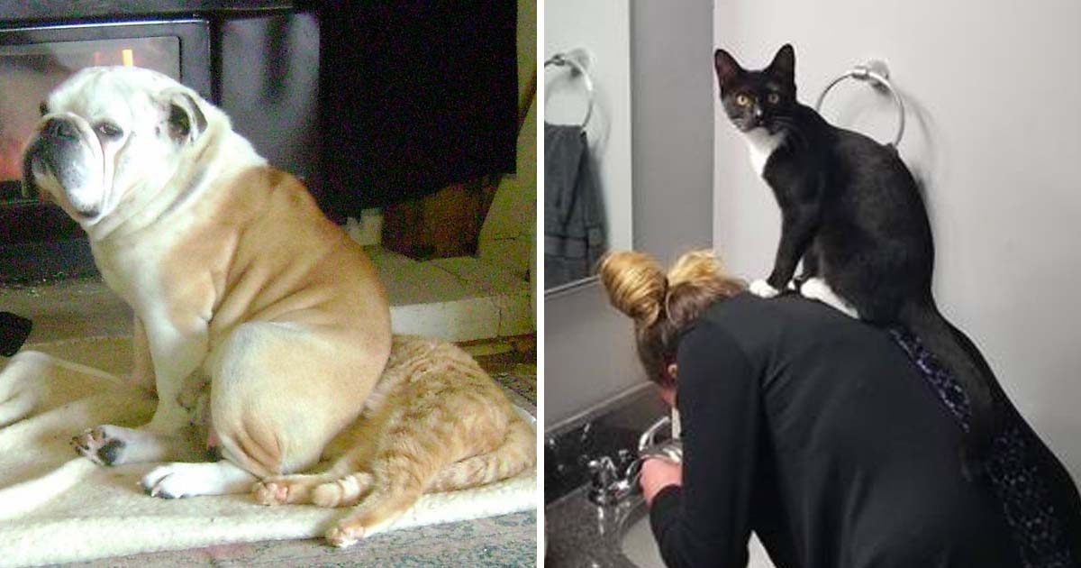 Some Animals Are Total Jerks (10+ pics)