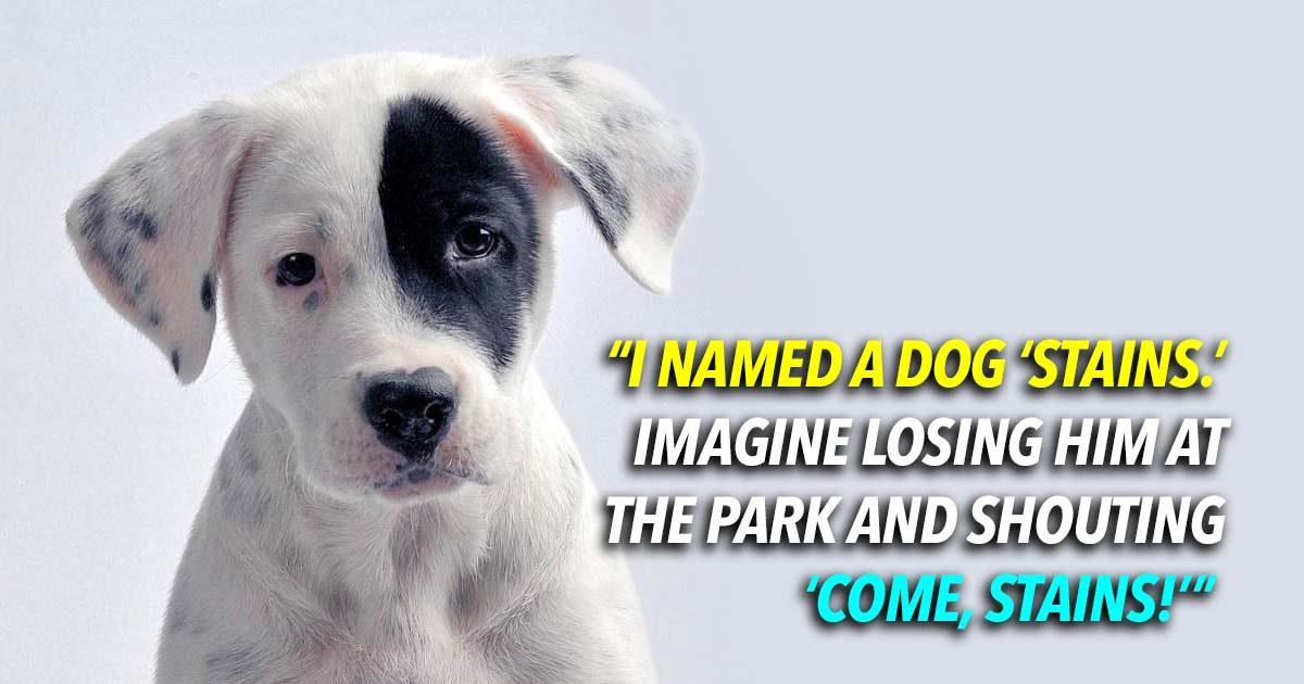 17 Hilarious Pet Names Owners Now Regret