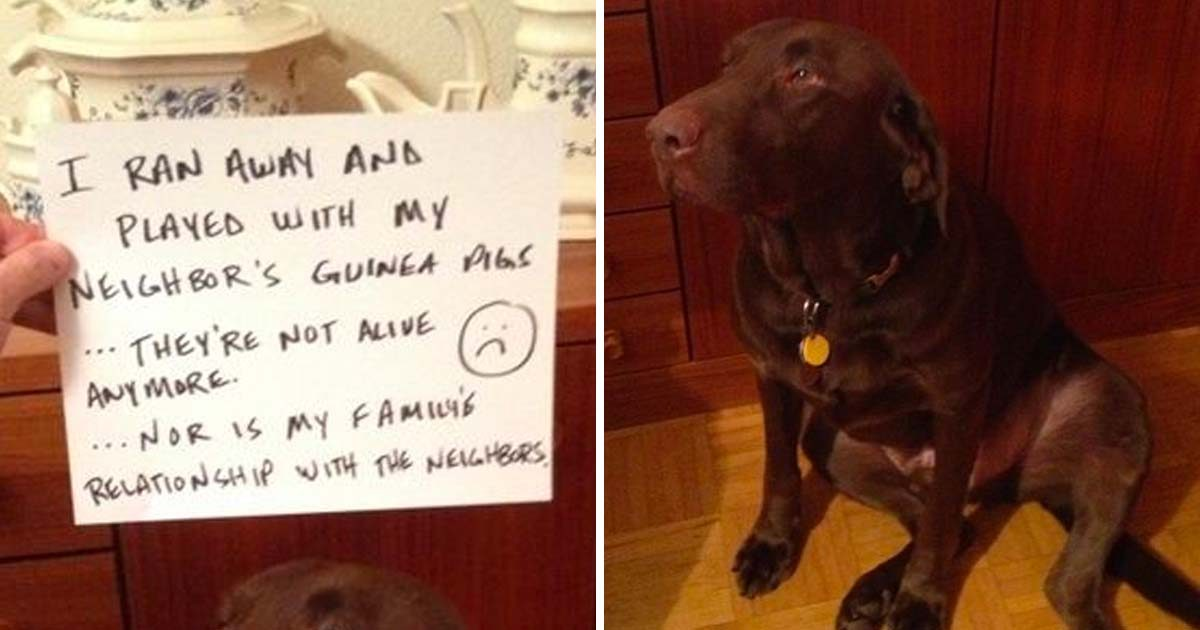 35 Hilarious Instances of Pet Shaming