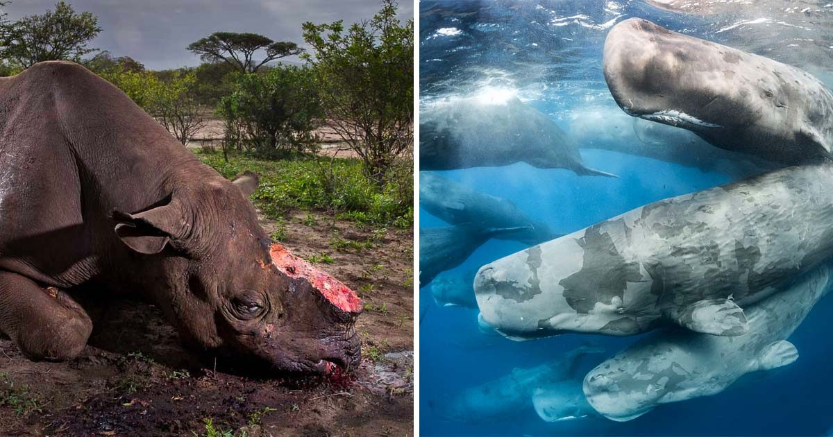 The Best Wildlife Photographs of 2017 Will Make Your Jaw Drop