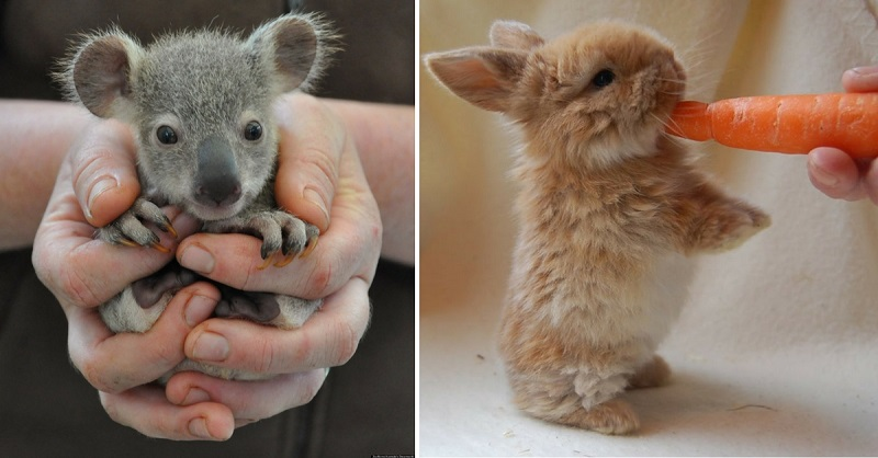 41 Baby Animal GIFs To Get You Through The Work Week
