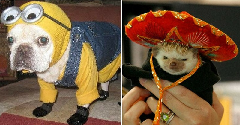 37 Photos of Pets in Costumes to Get You Stoked For Halloween
