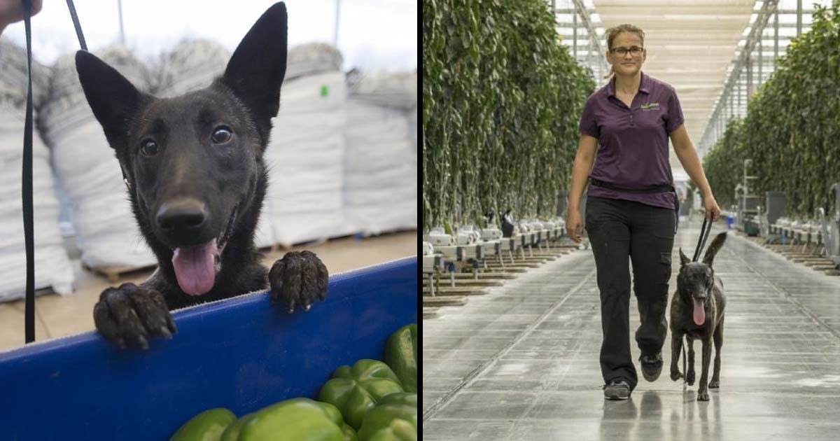 This Dog Saved An Entire Industry With Her Unique Skill
