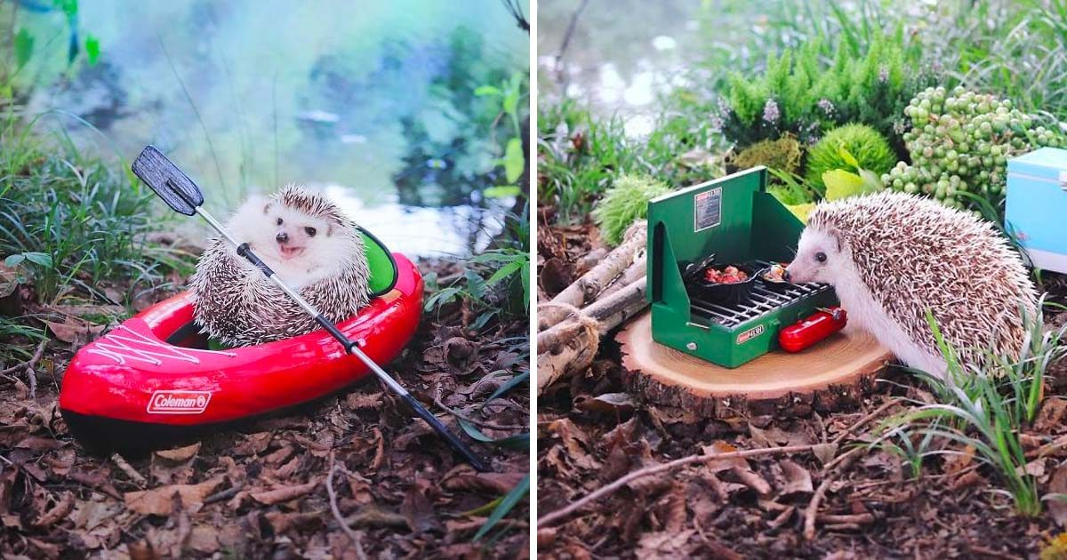 This Hedgehog Went Camping and It's the Cutest Thing Ever
