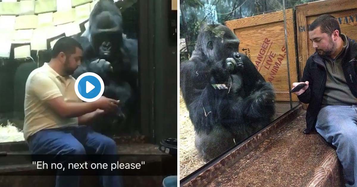 Man Helps Gorilla Find His Next Tinder Date