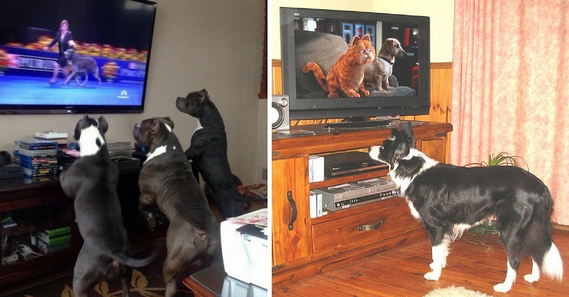 Dogs Watching Dogs on TV, You're Welcome