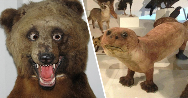 20+ Deeply Upsetting (But Hilarious) Taxidermy Fails