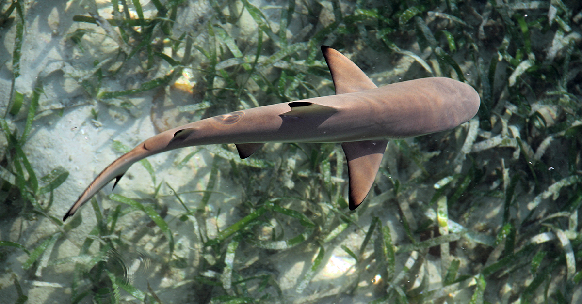 Threesome Steals Baby Shark From Aquarium By Sneaking It Out In A Stroller