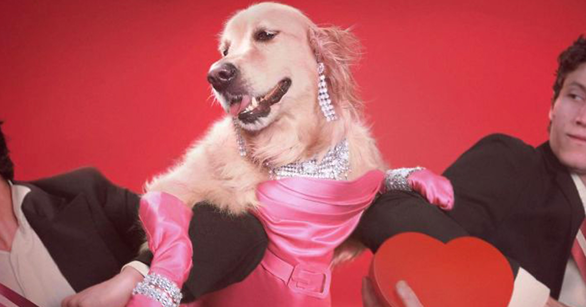 This Dog Recreated Iconic Madonna's Iconic Photos And It's Better Than You Can Pawssibly Imagine