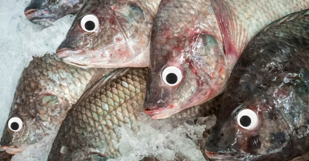 Store Busted For Putting Googly Eyes On Old Fish To Make Them Look Fresher